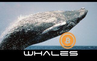 Криптовалютный рынок меняется: влияние «китов» на торговлю